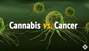 Cannabis Vs Cancer
