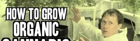How to Grow Organic Cannabis Indoors