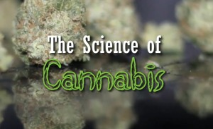 The Science Of Cannabis